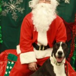 Santa with a beautiful Great Dane