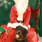 Santa with a wonderful Rottie