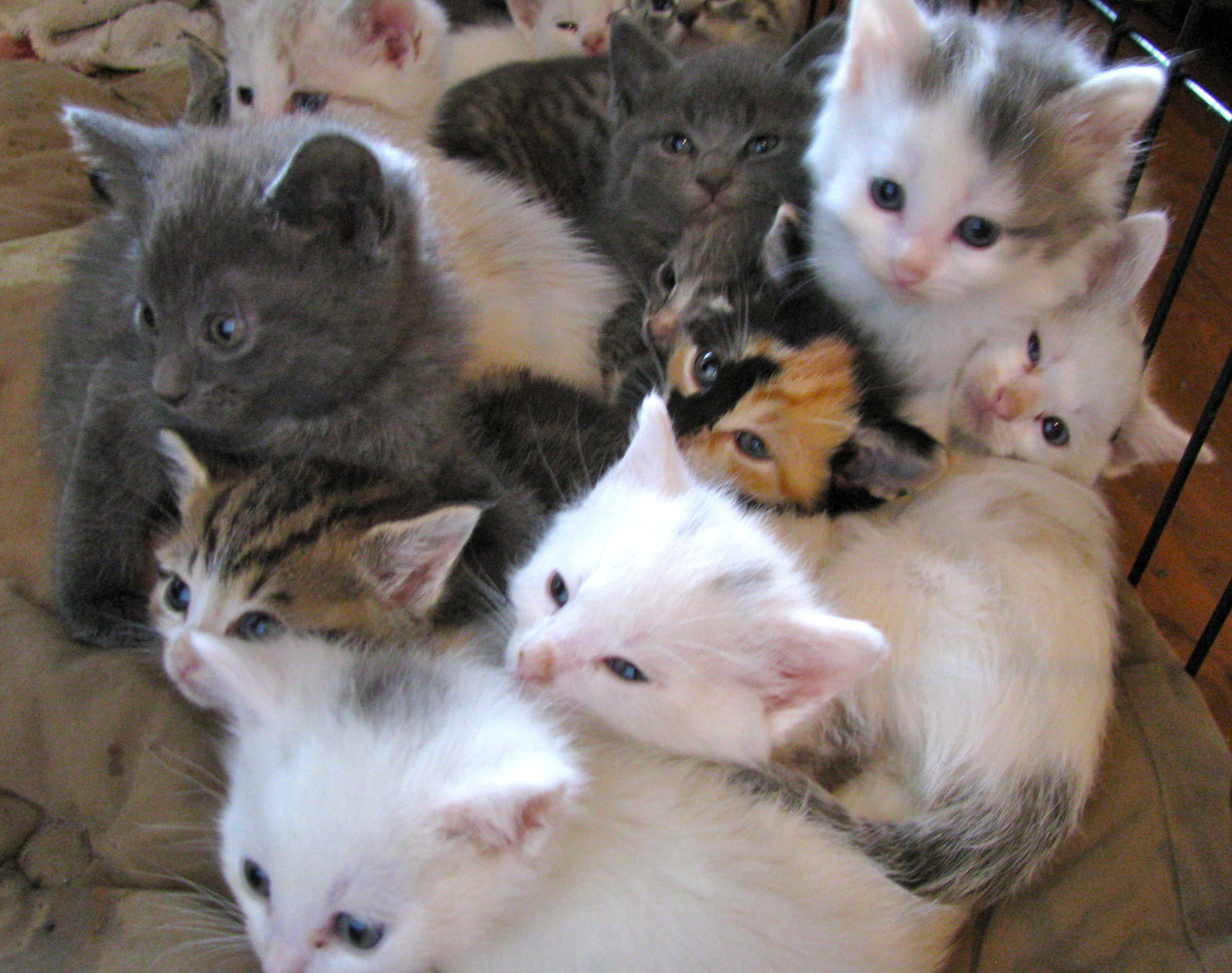 $25 Cats and Kittens – This Saturday ly