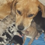 Mama and Babies (2)