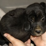 Puppy WIth Tumor (2)