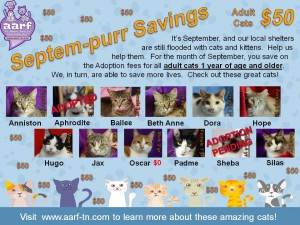 September 2014 Cat Promotion Flyer